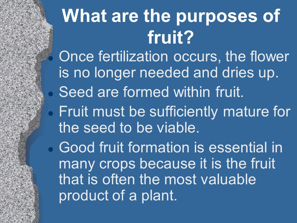 What are the purposes of fruit