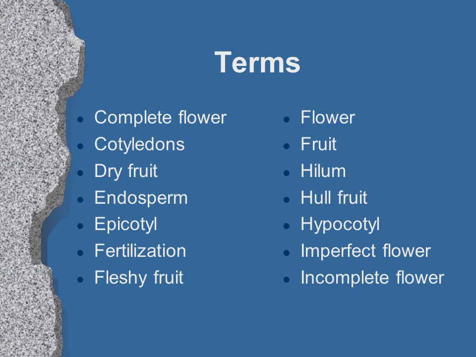 Terms Complete flower Cotyledons Dry fruit Endosperm Epicotyl