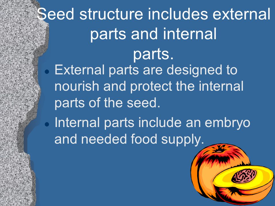 Seed structure includes external parts and internal parts.