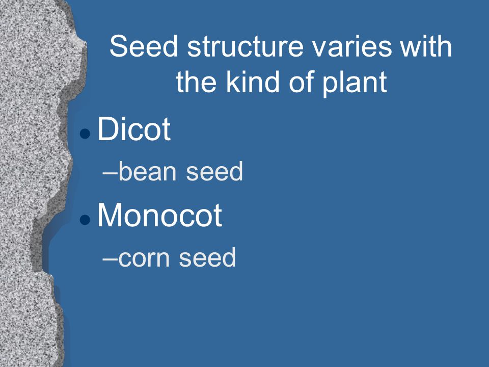 Seed structure varies with the kind of plant