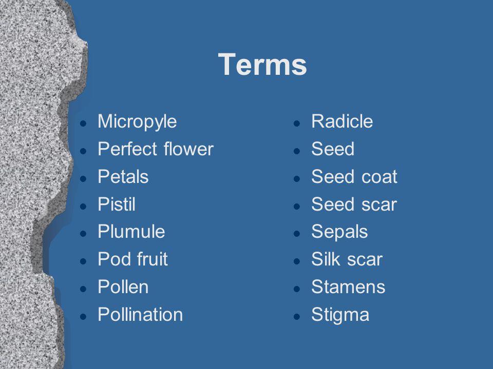 Terms Micropyle Perfect flower Petals Pistil Plumule Pod fruit Pollen