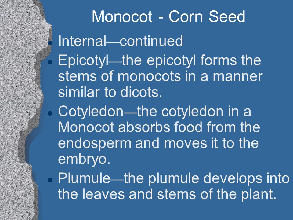 Monocot - Corn Seed Internal—continued