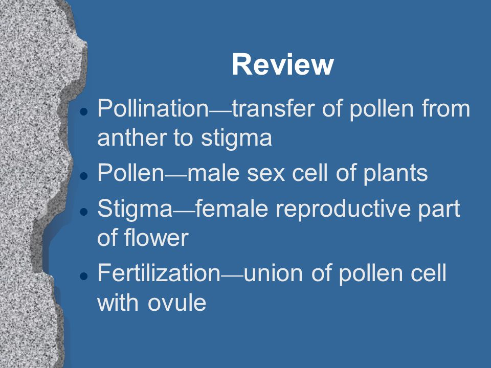 Review Pollination—transfer of pollen from anther to stigma