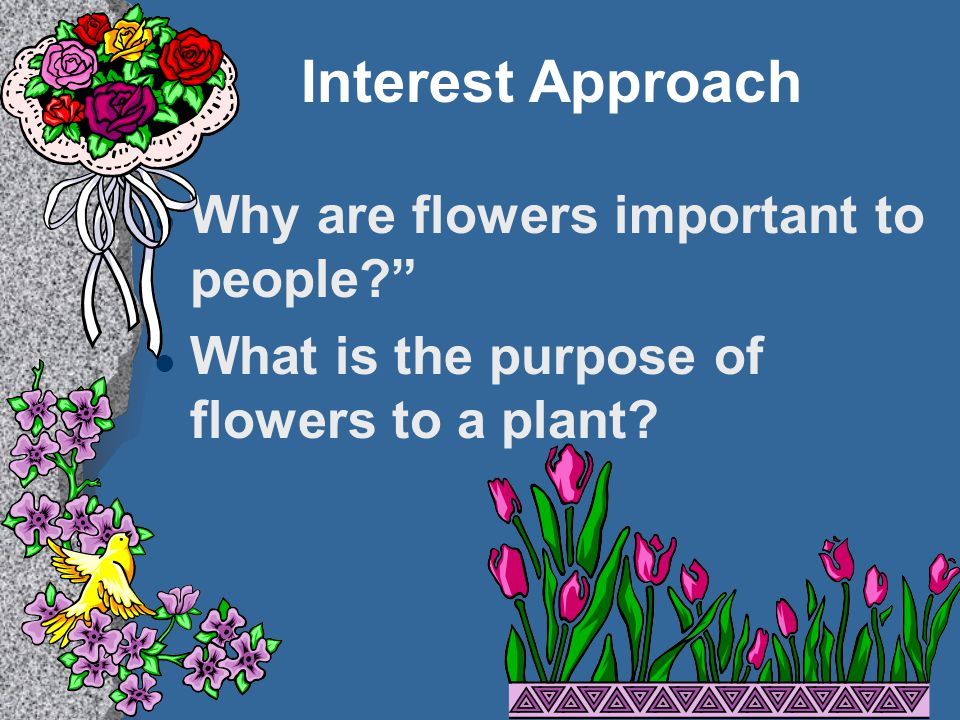 Interest Approach Why are flowers important to people