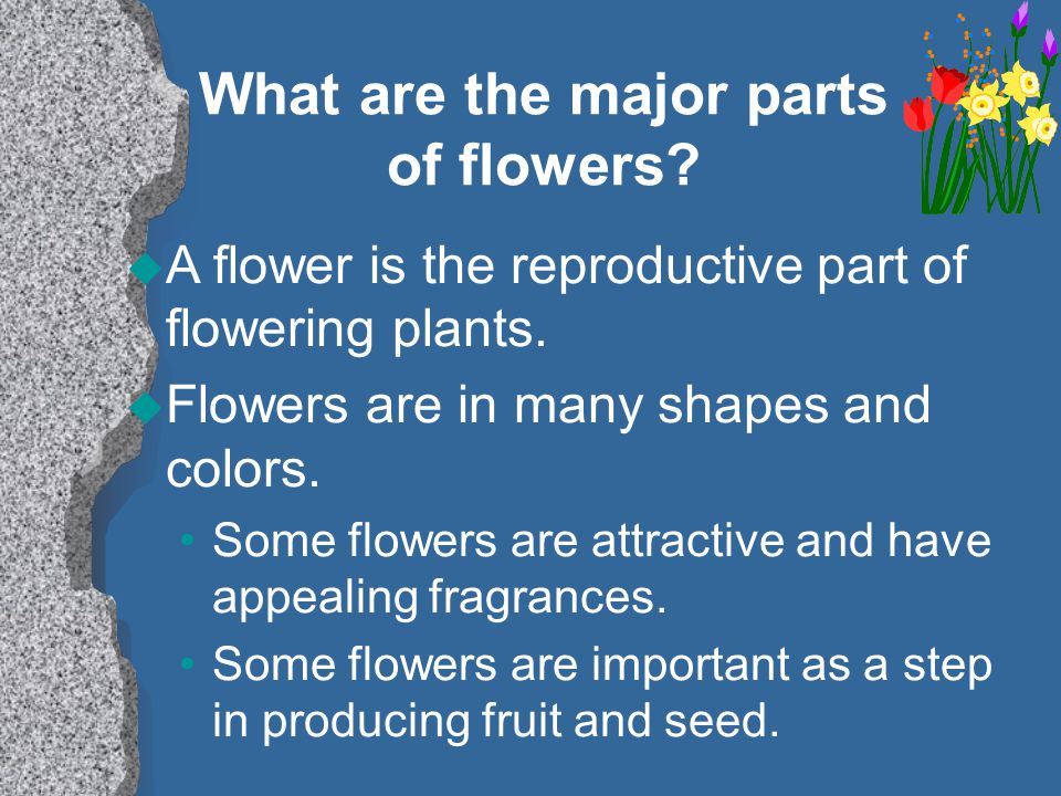 What are the major parts of flowers