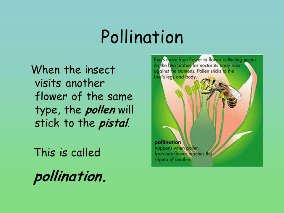 Pollination pollination.