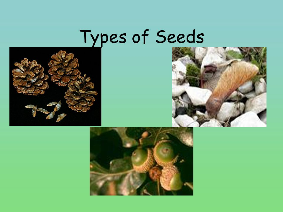 Types of Seeds