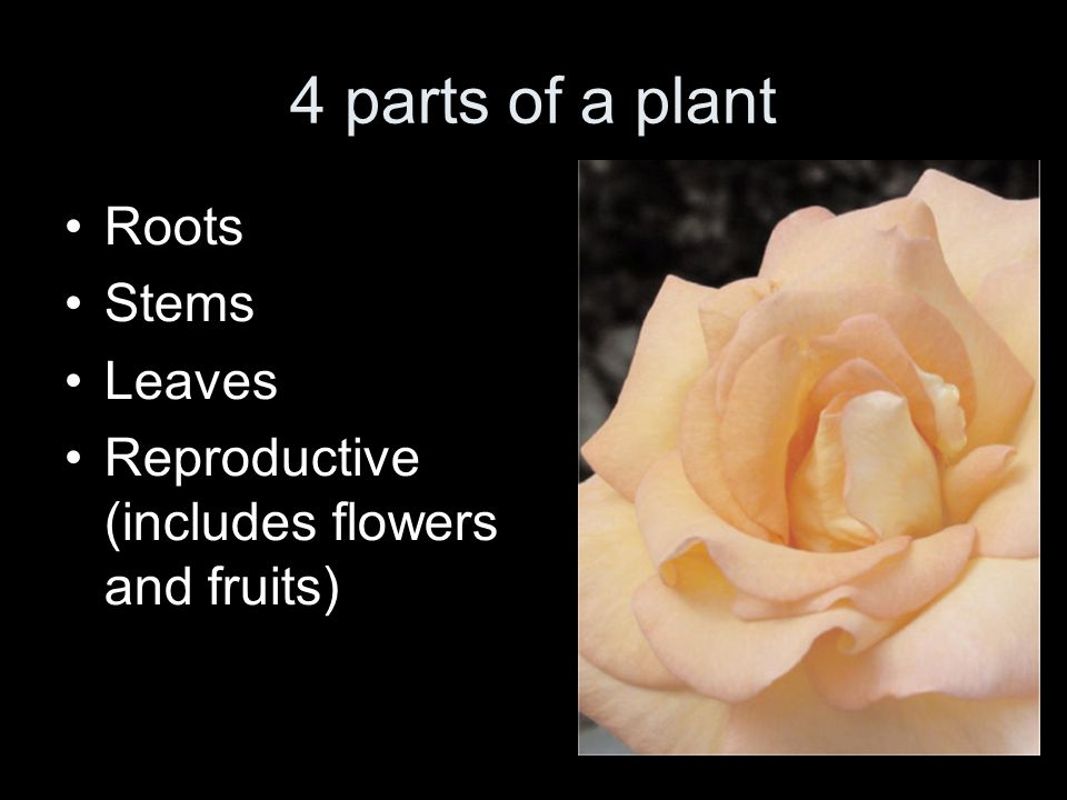 4 parts of a plant Roots Stems Leaves