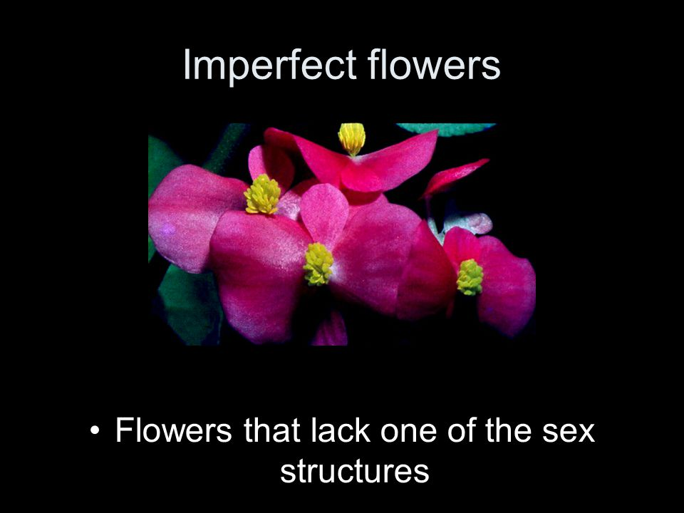 Flowers that lack one of the sex structures