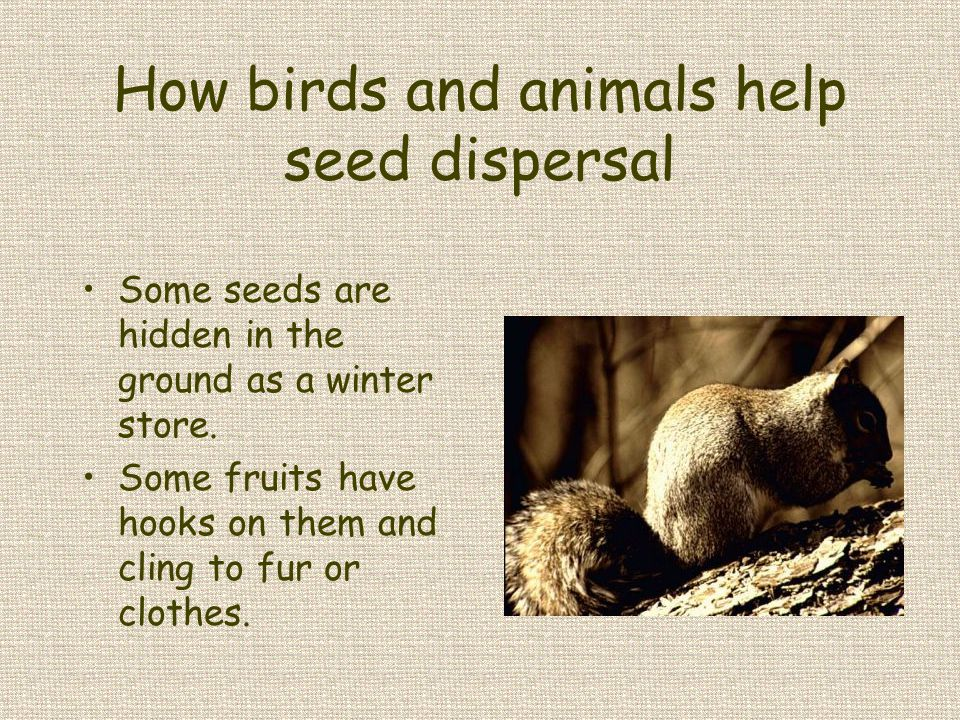 How birds and animals help seed dispersal
