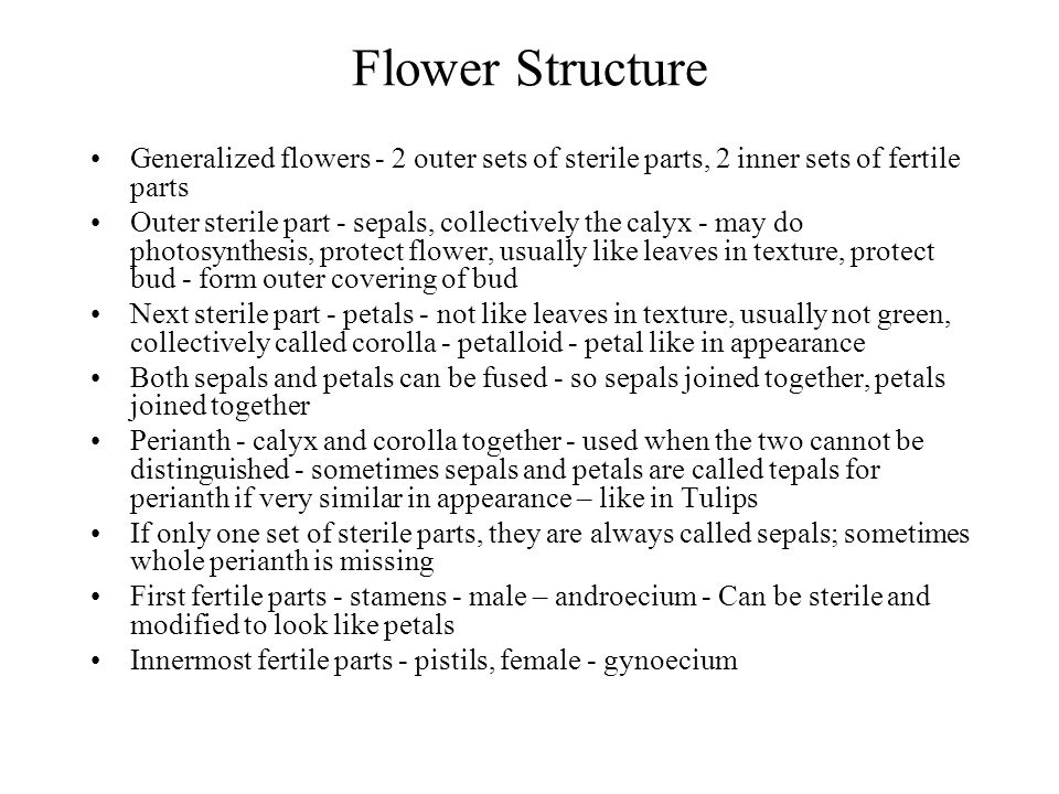 Flower Structure Generalized flowers - 2 outer sets of sterile parts, 2 inner sets of fertile parts.