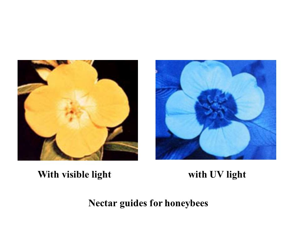 With visible light with UV light