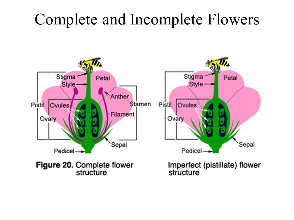 Complete and Incomplete Flowers