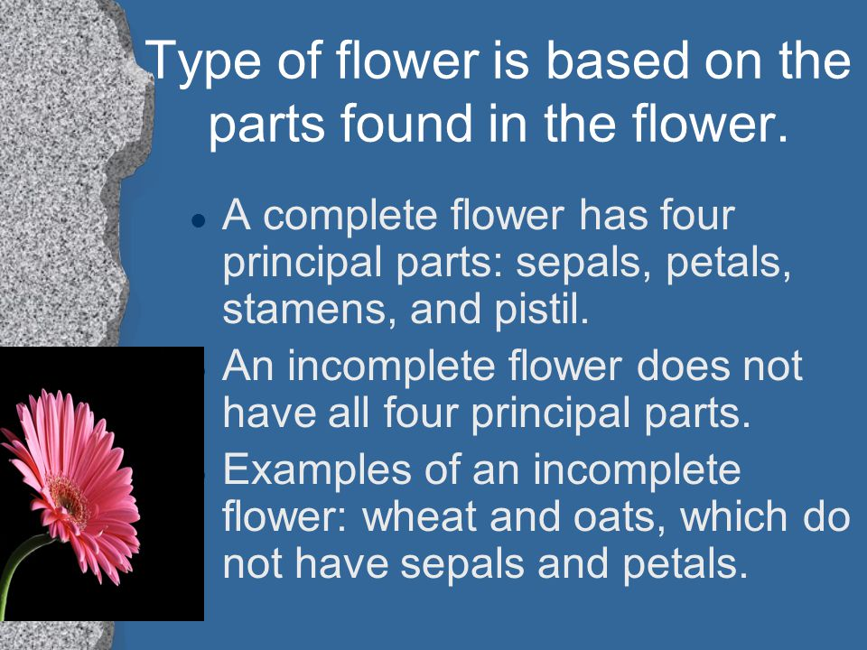 Type of flower is based on the parts found in the flower.