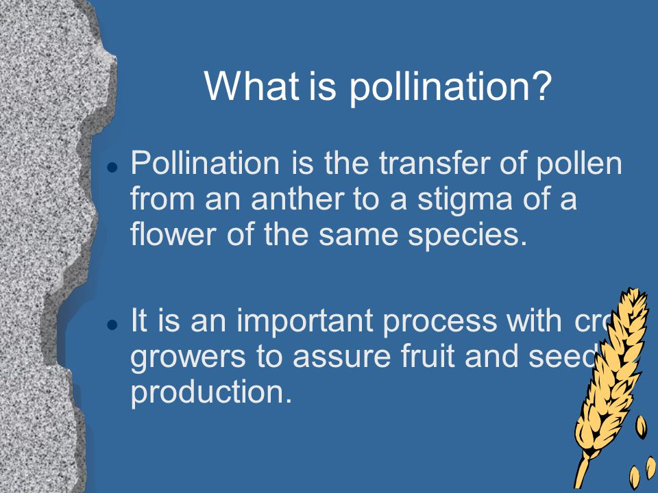 What is pollination Pollination is the transfer of pollen from an anther to a stigma of a flower of the same species.