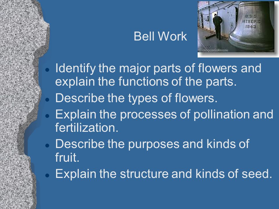 Describe the types of flowers.