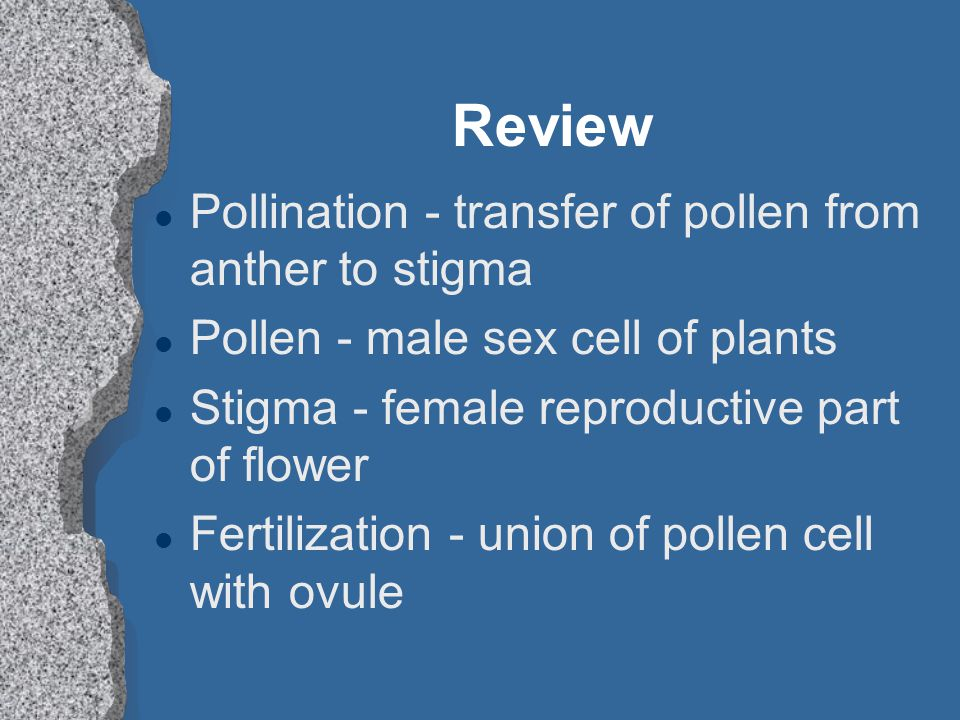 Review Pollination - transfer of pollen from anther to stigma