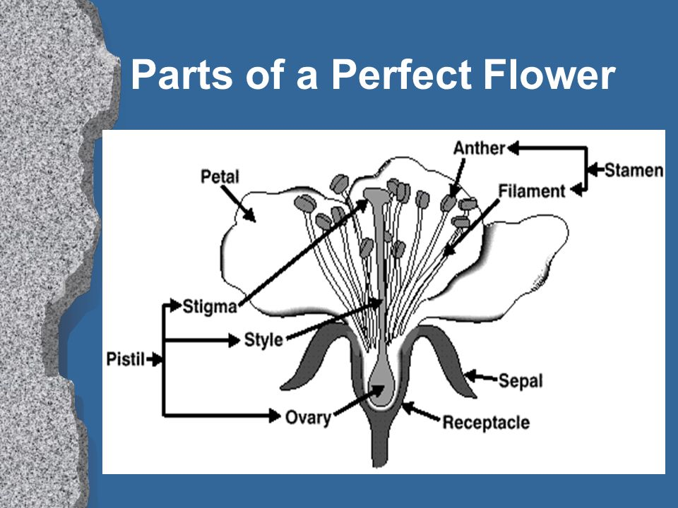 Parts of a Perfect Flower