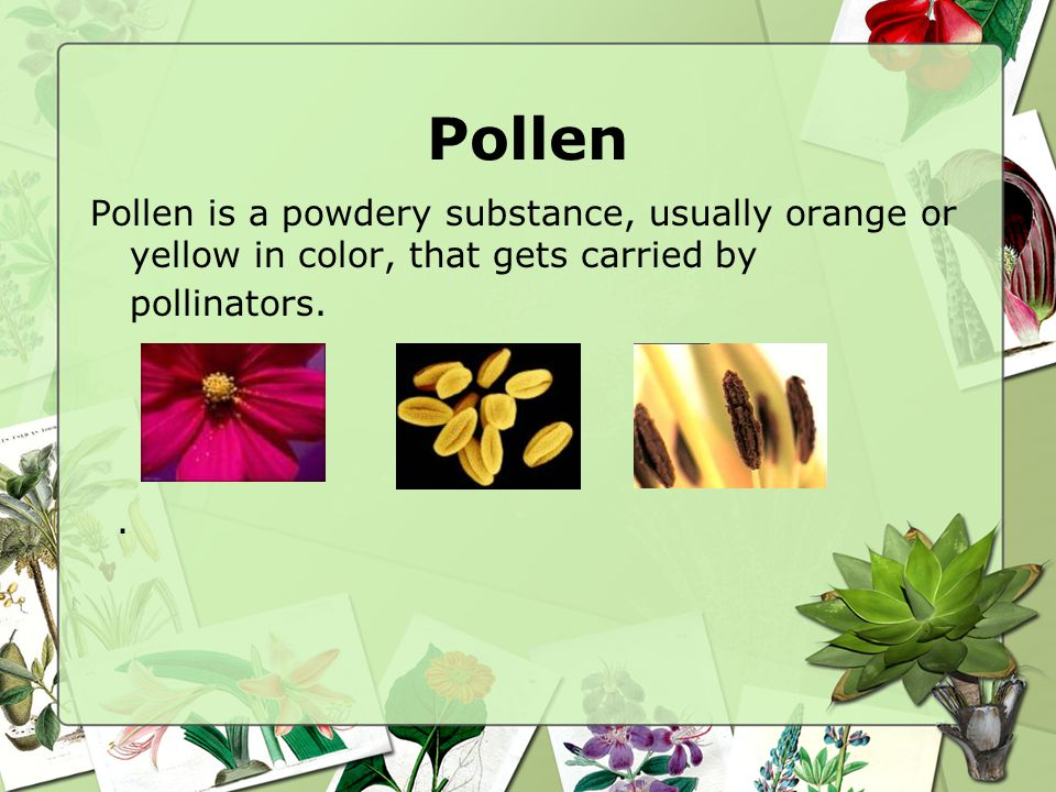 Pollen Pollen is a powdery substance, usually orange or yellow in color, that gets carried by pollinators.