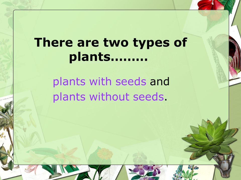 There are two types of plants………