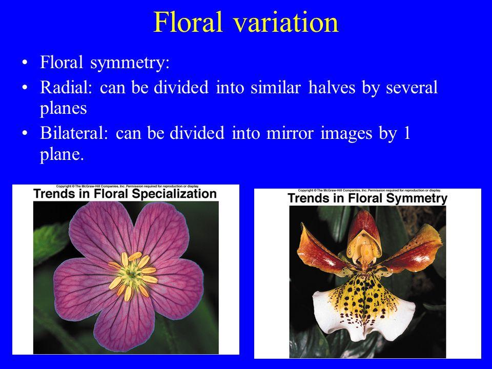 Floral variation Floral symmetry: