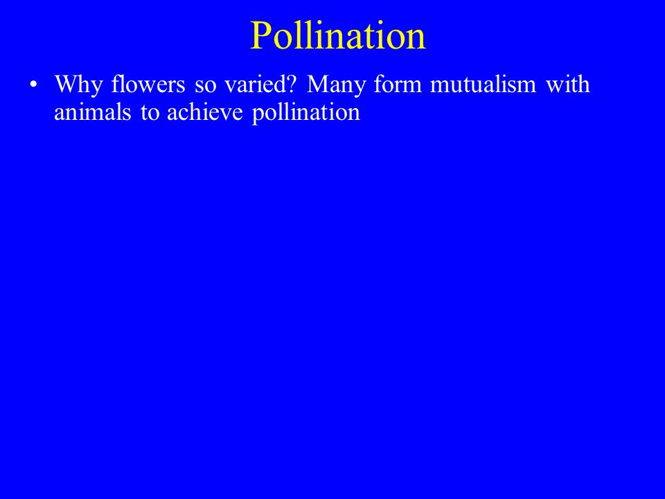 Pollination Why flowers so varied Many form mutualism with animals to achieve pollination
