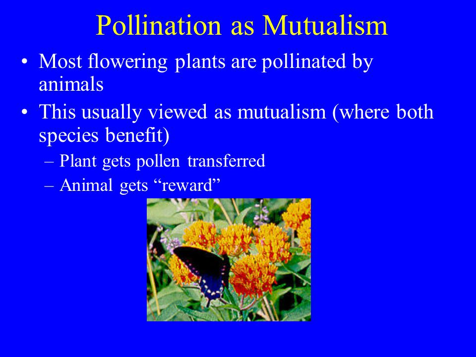 Pollination as Mutualism