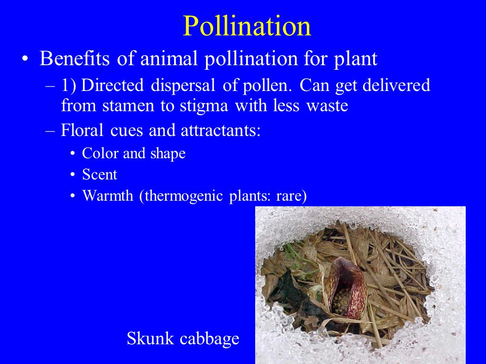 Pollination Benefits of animal pollination for plant