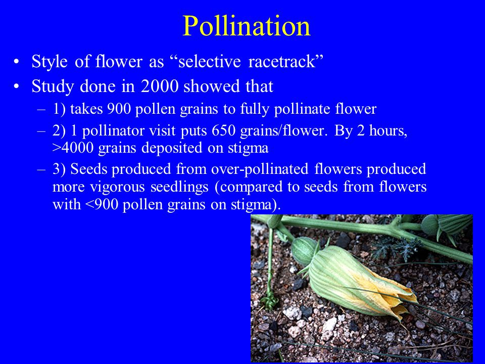 Pollination Style of flower as selective racetrack