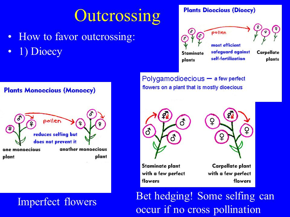 Outcrossing How to favor outcrossing: 1) Dioecy