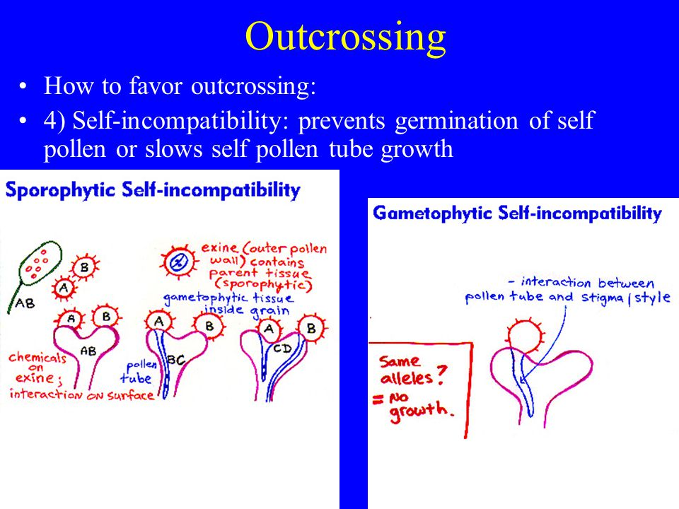 Outcrossing How to favor outcrossing: