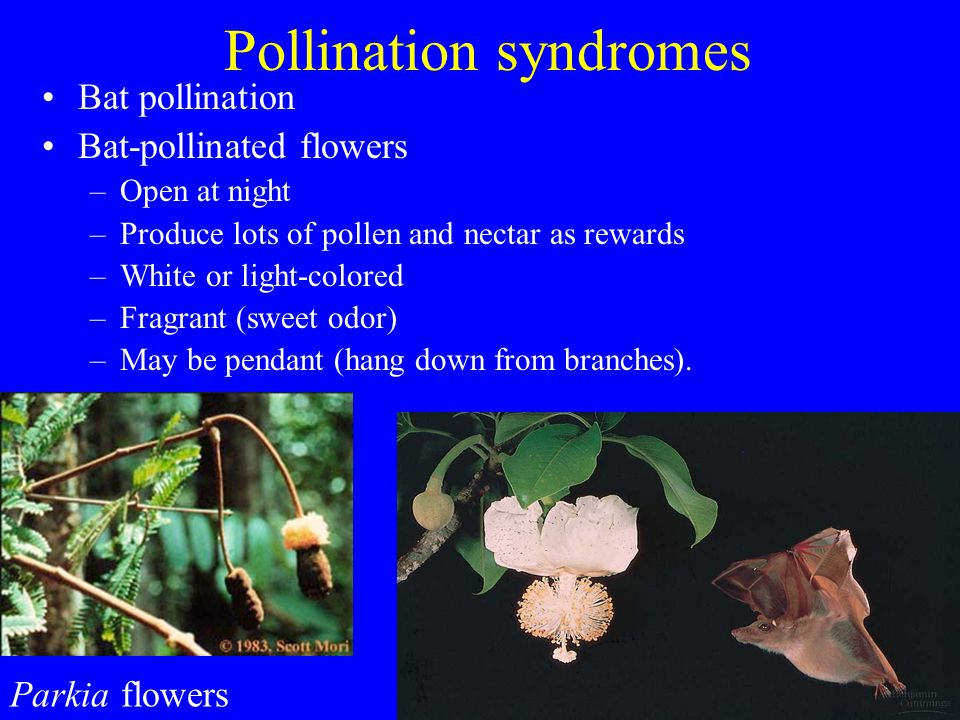Pollination syndromes