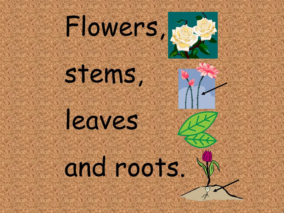 Flowers, stems, leaves and roots.