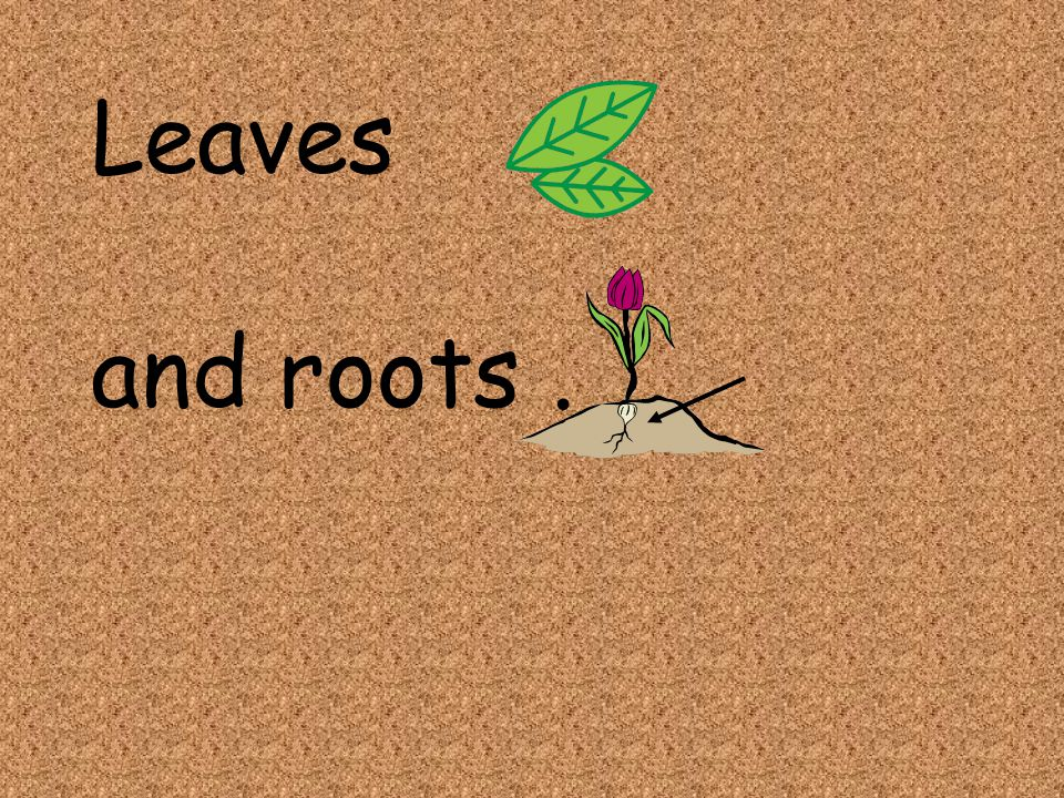 Leaves and roots .