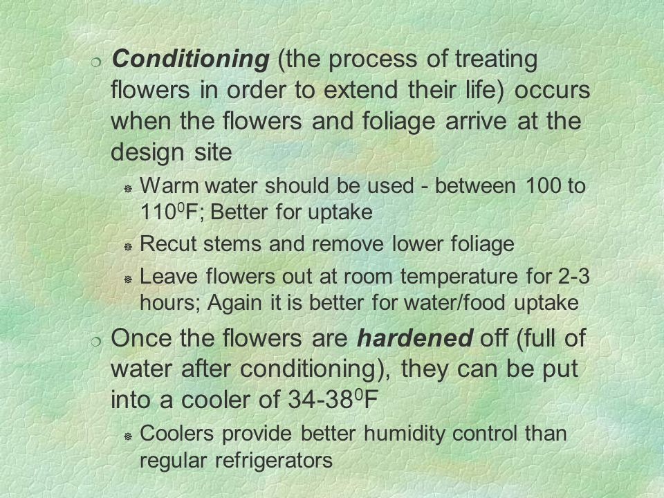 Conditioning (the process of treating flowers in order to extend their life) occurs when the flowers and foliage arrive at the design site