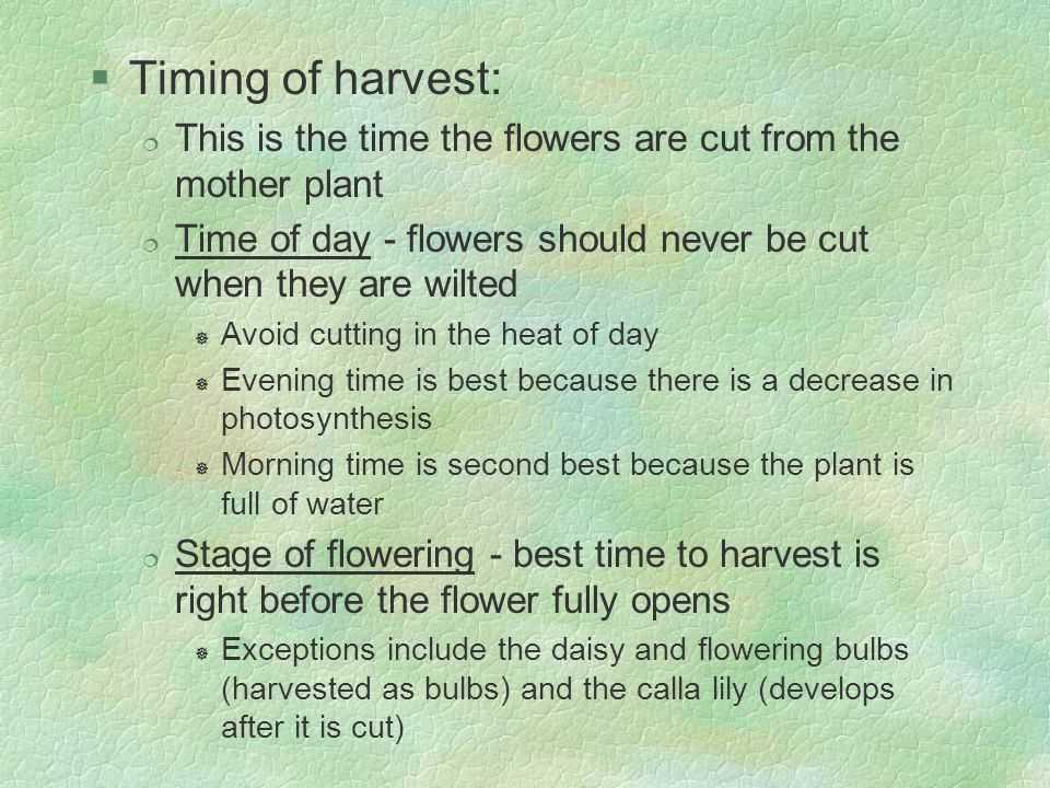 Timing of harvest: This is the time the flowers are cut from the mother plant. Time of day - flowers should never be cut when they are wilted.