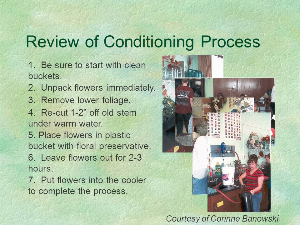 Review of Conditioning Process