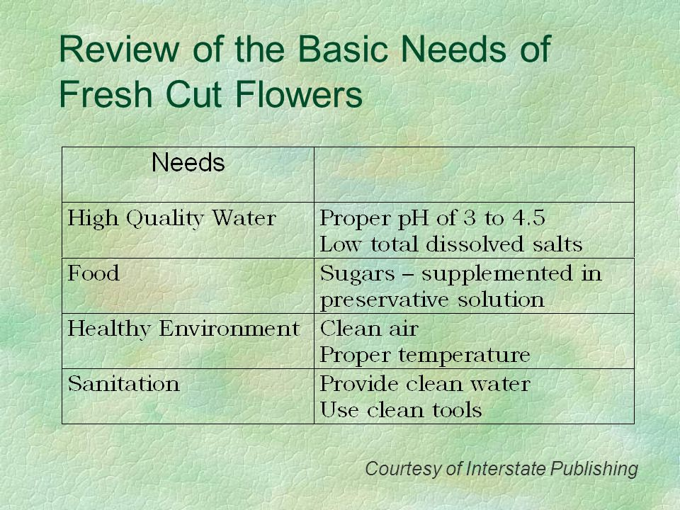 Review of the Basic Needs of Fresh Cut Flowers
