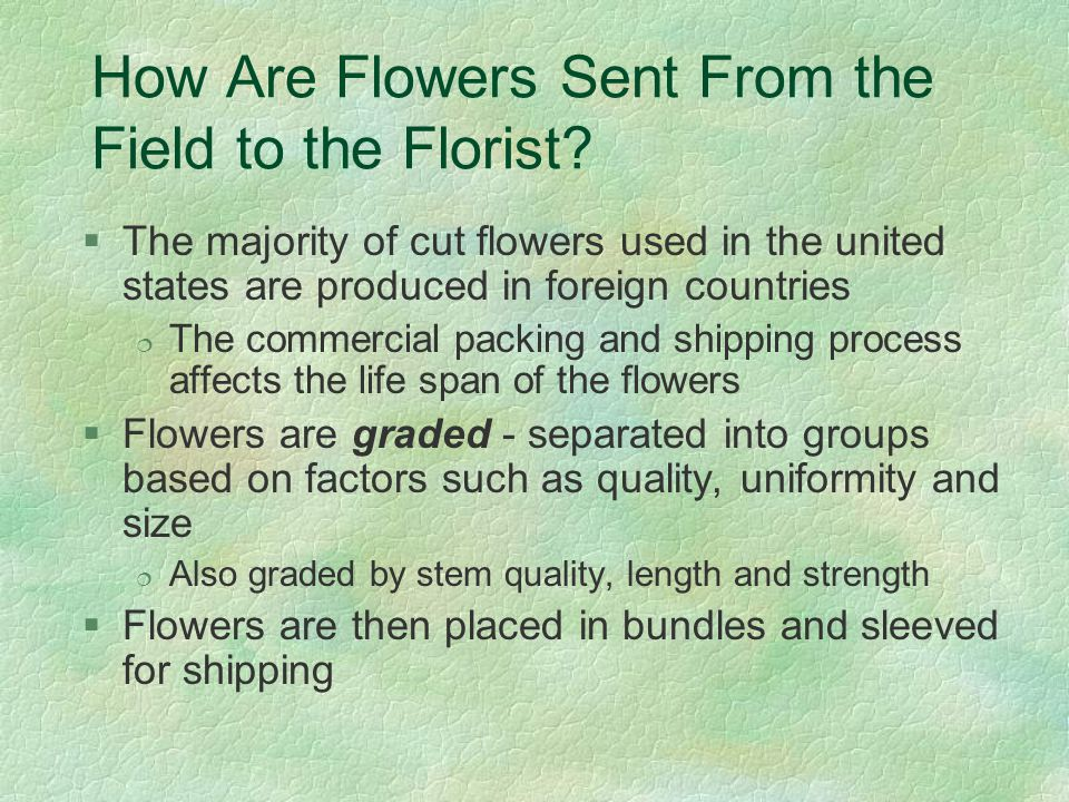 How Are Flowers Sent From the Field to the Florist