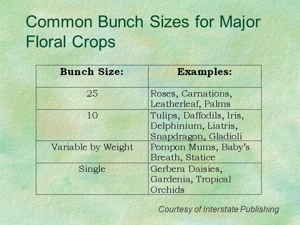 Common Bunch Sizes for Major Floral Crops