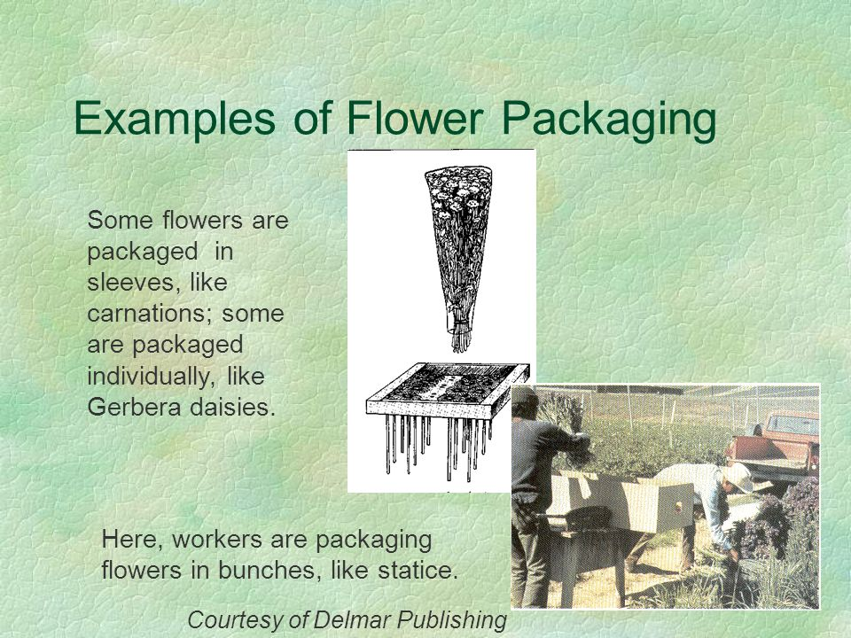 Examples of Flower Packaging
