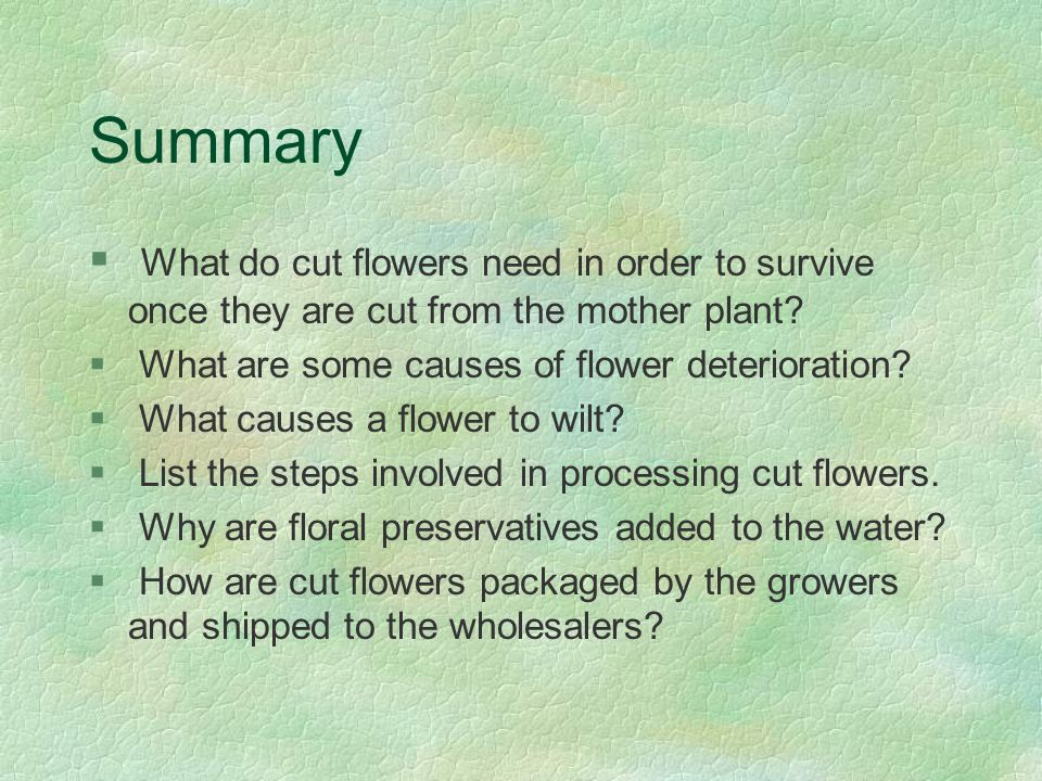 Summary What do cut flowers need in order to survive once they are cut from the mother plant What are some causes of flower deterioration