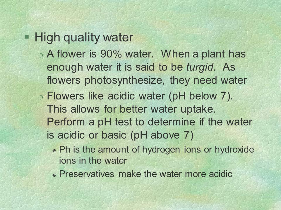 High quality water A flower is 90% water. When a plant has enough water it is said to be turgid. As flowers photosynthesize, they need water.