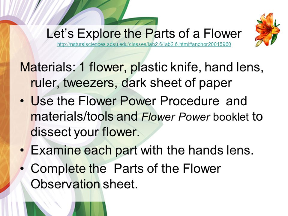 Let's Explore the Parts of a Flower http://naturalsciences. sdsu