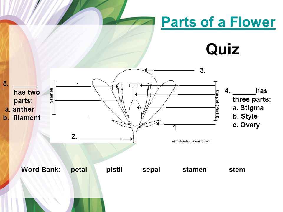 Parts of a Flower Quiz 3. _____ 3. 5a.. 4a.. ______ has two parts: