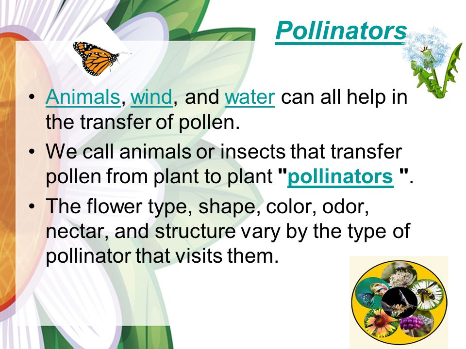 Pollinators Animals, wind, and water can all help in the transfer of pollen.