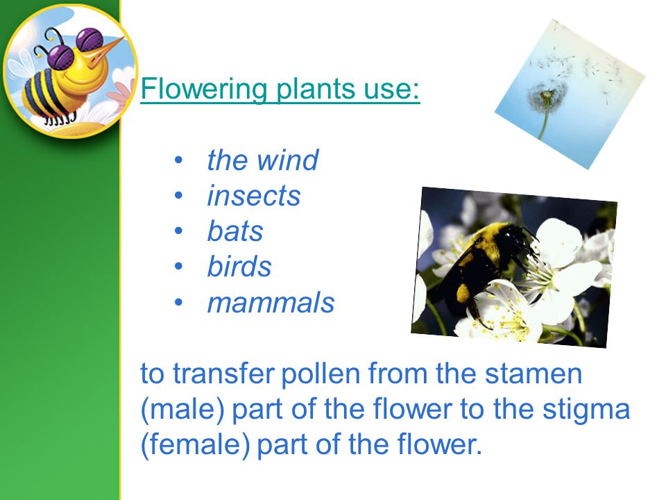 Flowering plants use: the wind insects bats birds mammals