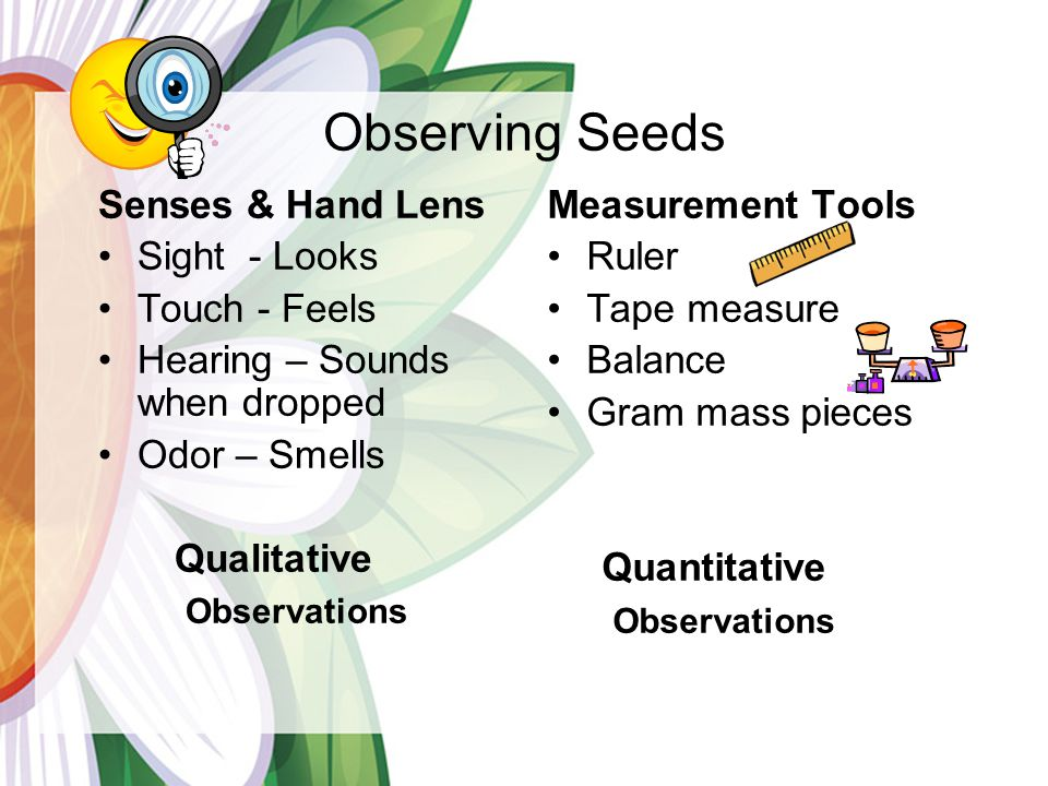 Observing Seeds Senses & Hand Lens Sight - Looks Touch - Feels