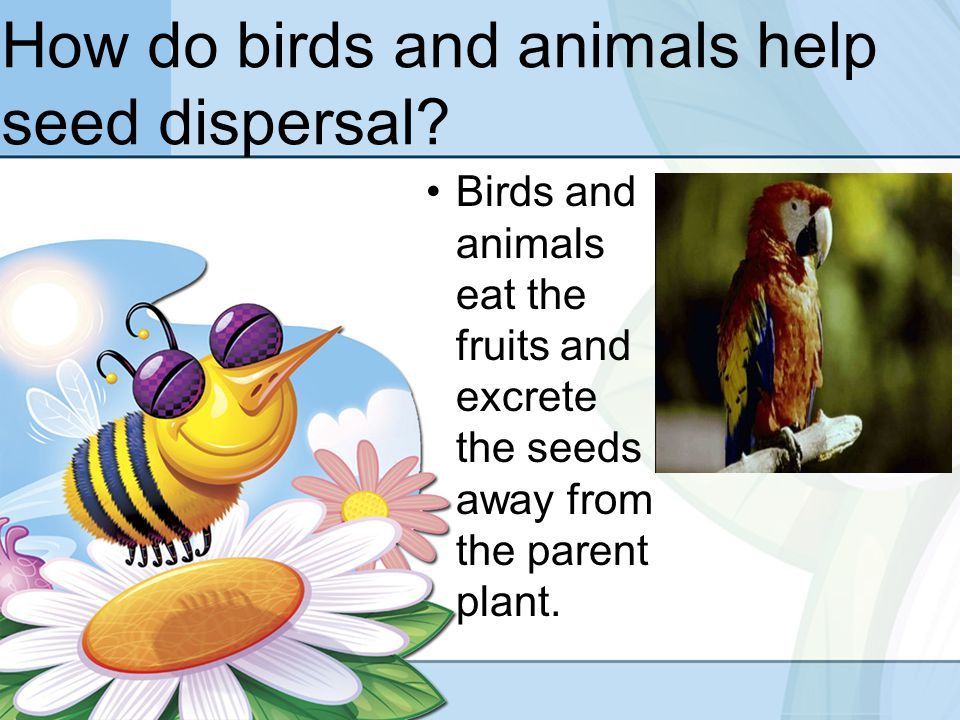 How do birds and animals help seed dispersal