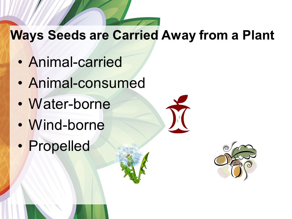 Ways Seeds are Carried Away from a Plant